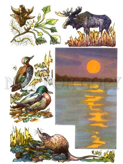 the wild duck essay The wild duck literature essays are academic essays for citation these papers were written primarily by students and provide critical analysis of the wild duck by.