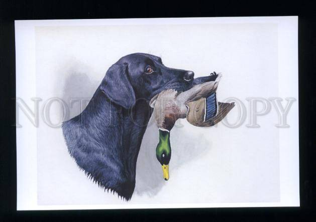 177826 Russia Boris Riabushinsky Black LAB With Mallard ...